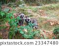 狸 動物 哺乳動物 23347480