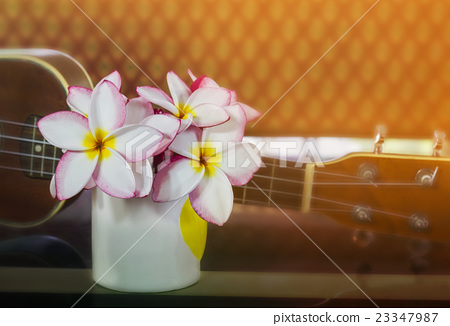 flowers in cup with ukulele  23347987