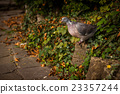 Pigeon in a park 23357244