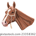 horse head with halter 23358362
