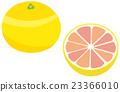 fruit, fruits, grapefruit 23366010