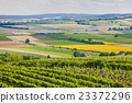 vineyards, Southern Moravia, Czech Republic 23372296