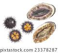 abalone, sea urchin, illustration 23378287