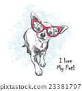 Funny smooth-haired chihuahua wearing glasses 23381797