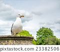Seagull outdoor with cloudy sky 23382506