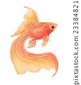 goldfish goldfishes gold 23384821