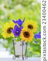 花瓶花向日葵和大白菜 23400462