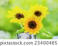 꽃병에 해바라기 꽃 23400465