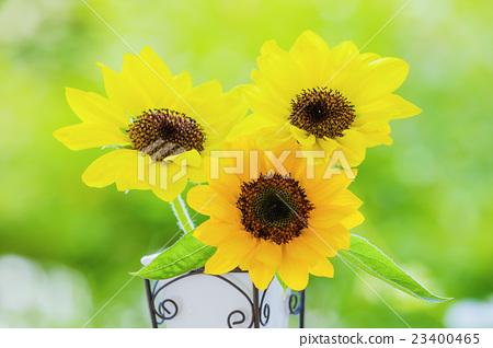 Vase of sunflower flowers 23400465