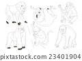 插圖 動物 黑猩猩 23401904