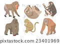 动物 黑猩猩 大猩猩 23401969