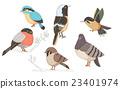動物 鴿 麻雀 23401974