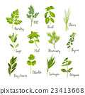 Set of herbs isolated 23413668