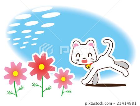 大波斯菊 白猫 猫 23414981