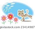 大波斯菊 猫 猫咪 23414987