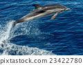 Dolphin while jumping in the deep blue sea 23422780