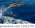 Dolphin while jumping in the deep blue sea 23422781