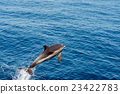 Dolphin while jumping in the deep blue sea 23422783