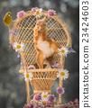 squirrel, animal, flower 23424603