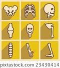 頭骨 解剖學 骨頭 23430414