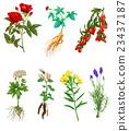花朵 花卉 花 23437187