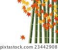 대나무와 단풍 23442908