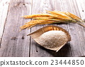 Harvest image of rice 23444850