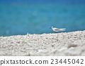 鷗類 鳥兒 鳥 23445042