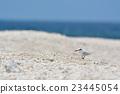 鷗類 鳥兒 鳥 23445054