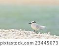 鷗類 鳥兒 鳥 23445073