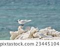 鷗類 鳥兒 鳥 23445104