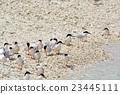 鷗類 鳥兒 鳥 23445111