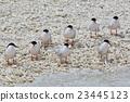 鷗類 鳥兒 鳥 23445123