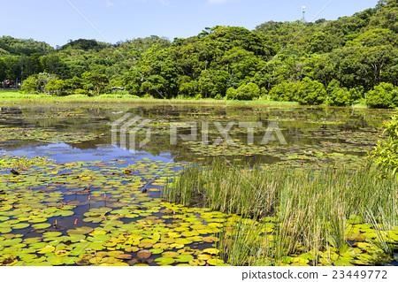 台灣屏東的東源濕地 23449772