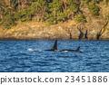 water, mammals, wild 23451886
