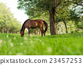 horse eating in green field 23457253