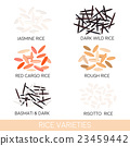 Rice varieties. Vector illustration 23459442