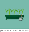 Green Onions Cultivating Vector Illustration. 23459845