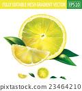 lemon, vector, illustration 23464210