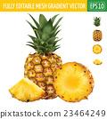 Pineapple on white background. Vector illustration 23464249