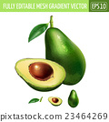Avocado on white background. Vector illustration 23464269