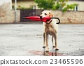 dog, umbrella, waiting 23465596