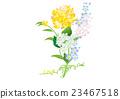 ดอกไม้,ใบไม้,ดอกไม้บาน 23467518
