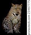 Leopard portrait 23467775
