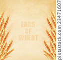 Ears of wheat on old paper background 23471607
