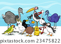birds group cartoon illustration 23475822