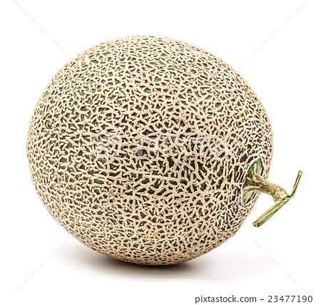 single melon 23477190