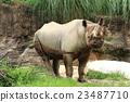動物 哺乳動物 犀牛 23487710