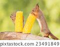 corn fun 23491849