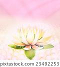 lotus flower bloom 23492253